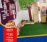 Artificial Grass Carpet For residential as well as commercial uses.