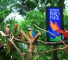Singapore Cheap ticket discount Zoo Bird River Night Safari garden by the bay Sky Park Marina Universal Studios Sentosa